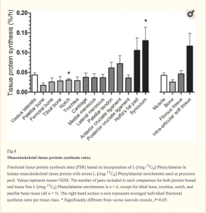 Tissue Protein Synthesis Rates